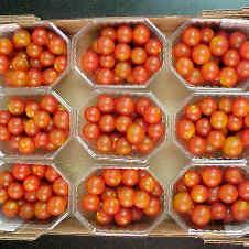 20091201155938-tomate.jpg