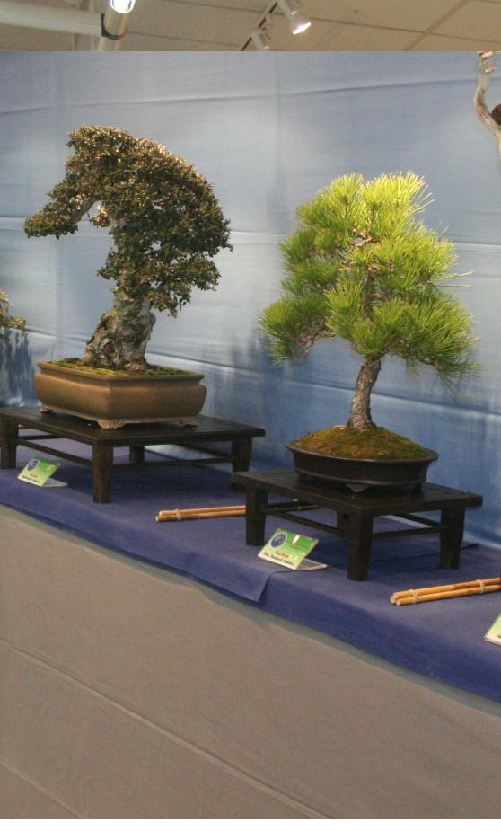 20111209162255-expo-bonsai-en-casa-cultura-almunecar-11.jpg