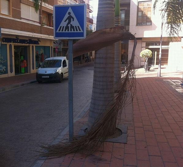 20140905195854-estado-de-la-vegetacion-en-una-plaza-del-centro.jpg