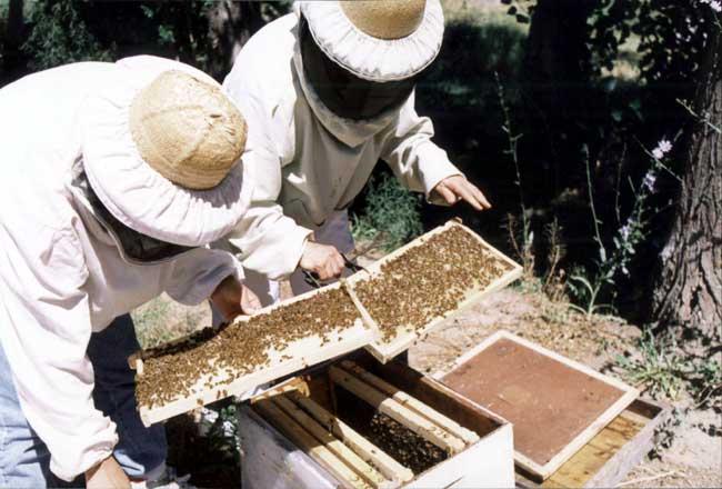 20141016181744-20120203164752-curso-apicultura.jpg