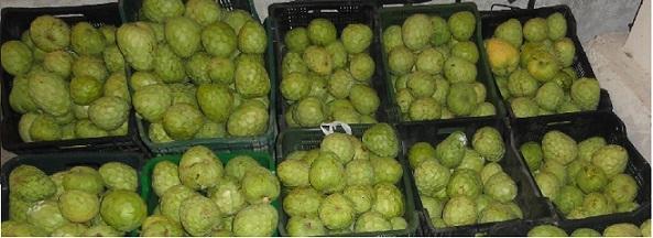 La Policía Nacional detiene a un hombre  por sustraer 52 kgs de frutos tropicales