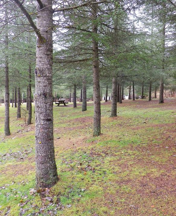 El PMD Almuñécar realizará este domingo una ruta por la Sierra de Huétor