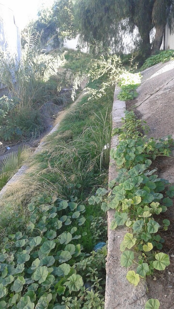 PA Motril advierte de la necesidad de limpiar  la Rambla de las Brujas en su tramo urbano no cubierto