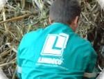 Limdeco pide la incorporación al trabajo de los fijos discontinuos