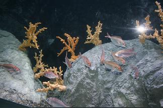 El acuario de Almuñécar ya cuenta con medio millar de peces