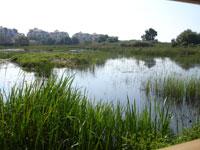 Subvencionan con 18.190 euros siete proyectos de voluntariado ambiental
