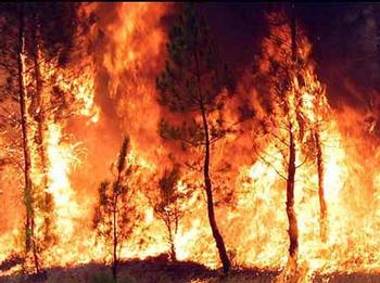 Cinco sentencias para cinco delitos relacionados con incendios. Uno de ellos ocurrió en Jete