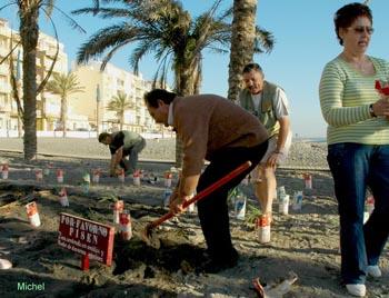 Restauración de azucenas marinas en Torrenueva
