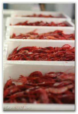 El Ayuntamiento de Motril busca financiación para la pesca de la gamba roja en la costa granadina