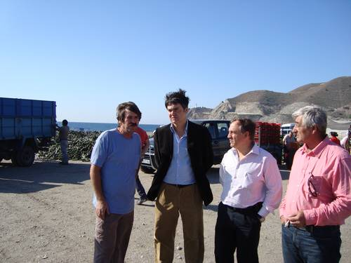 Los agricultores de la costa de Granada destruiran 8 millones de kilos de pepino