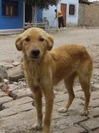 Cada vez se abandonan más perros en Salobreña