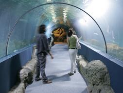 Filtraciones de agua en el acuario de Almuñécar aconsejan su cierre provisional