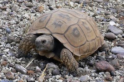 Rescatan a una tortuga de más de 50 kilos en Motril