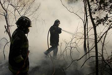 Condenado a prisión por causar un incendio en zona forestal