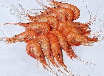 La quisquilla de Motril estará presente en la La III Feria del Mar