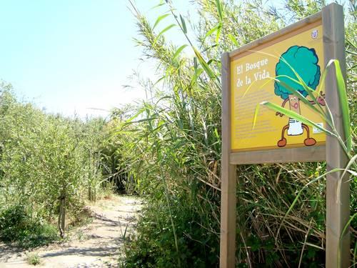 Medio Ambiente solicita a los interesados en participar en el Bosque de la Vida que dejen sus datos en el Ayuntamiento de Motril