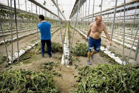 La Junta afirma que 'hay sectores que se han beneficiado' con la crisis del pepino
