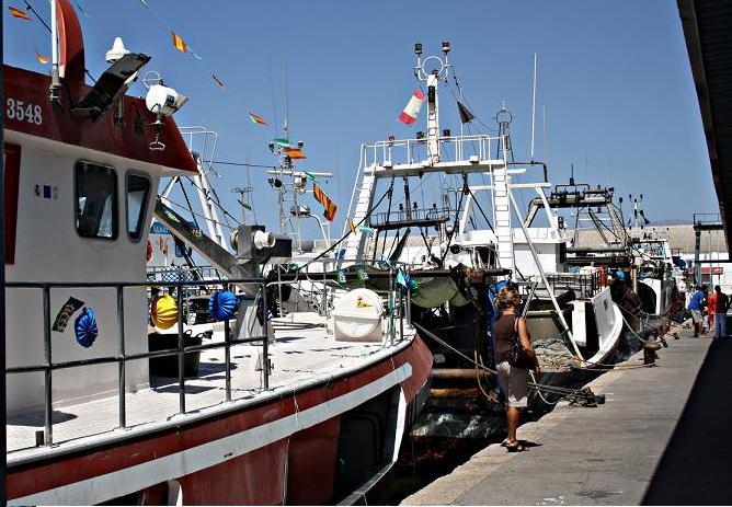 La Diputación y la UGR trabajan para el aprovechamiento de los descartes de pescado de Motril
