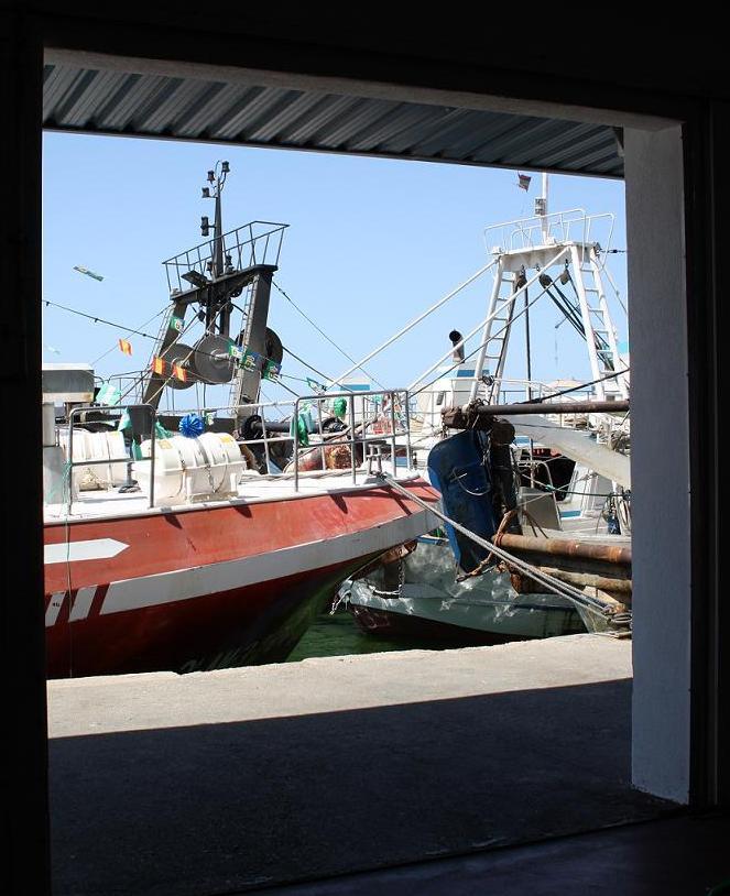 El sector pesquero registrado en Motril incrementa su valor comercializado un 20%
