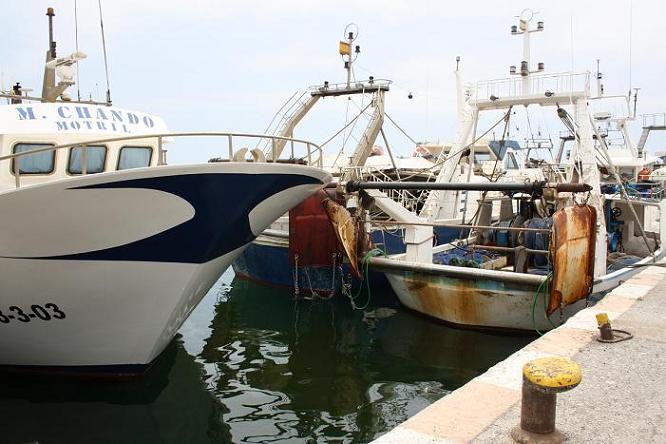 La búsqueda de caladeros de gamba roja es una de las peticiones de los pescadores de Motril a la Directora General de Pesca