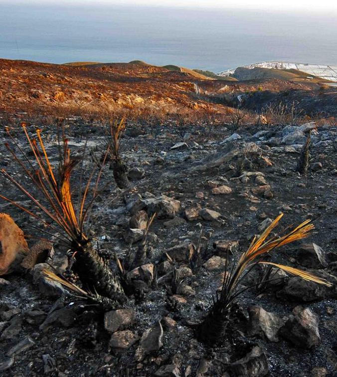 La Asociación Buxus denuncia el desastre ecológico consecuencia del incendio de Gualchos