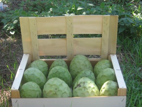 Recuperan 100 kilos de chirimoyas y alcachofas robados