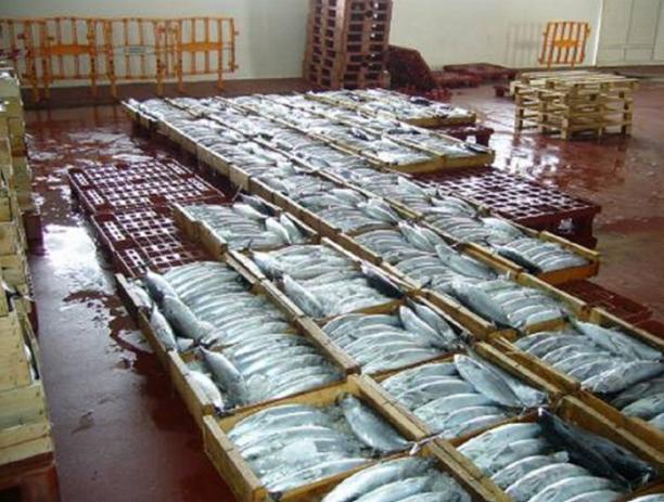 La Lonja de pescado de Motril vende 2,7 millones de kilos alcanzando los 6 millones de euros