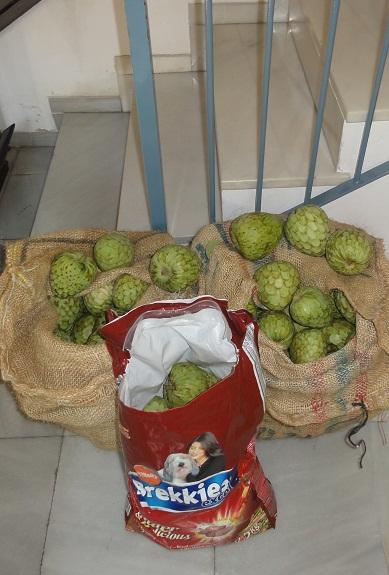 La policía local de Motril incauta a un menor un saco con chirimoyas