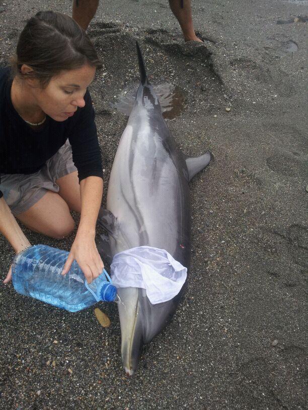 Hallado un delfín vivo varado en la playa El Pozuelo de Almuñécar