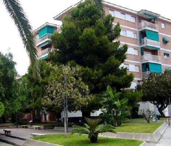 El Ayuntamiento de Motril responde a las demandas vecinales en la Huerta de la Condesa con una gran poda de arbolado
