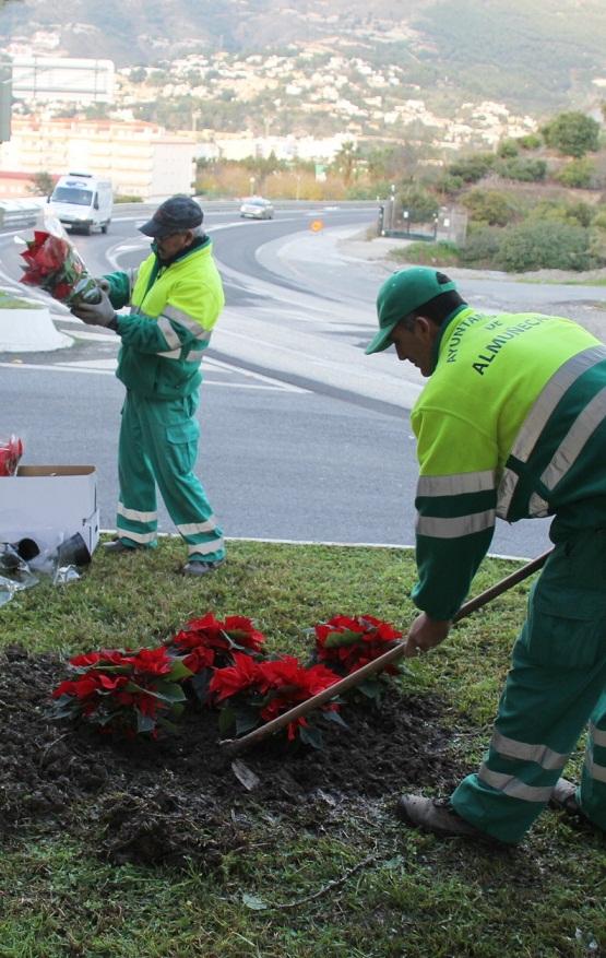 El Ayuntamiento sexitano decora con pascueros rotondas y jardineras de Almuñécar y La Herradura