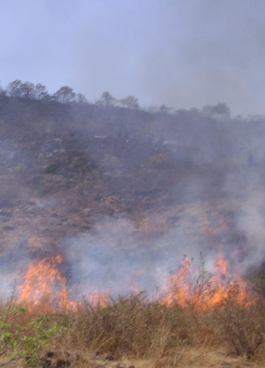 Un incendio cerca del Barranco del Zafio de Salobreña obliga a desalojar cuatro cortijos y una granja