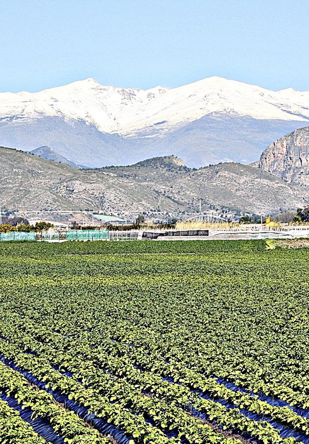 Los expedientes de ayudas a la modernización de explotaciones se retienen en Granada