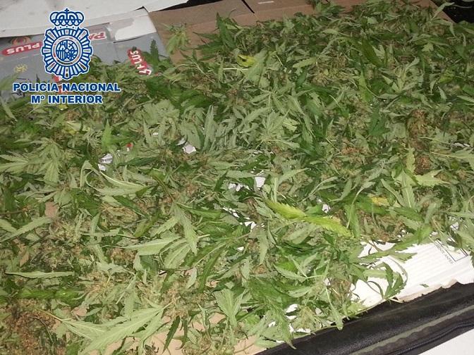 La Policía Nacional  detiene a dos personas que transportaban 1600 gramos de marihuana en un vehículo