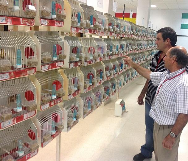 """Un total de 1436 ejemplares participan el XVII   Concurso Ornitológico """"Ciudad de Almuñécar"""" 2013"""