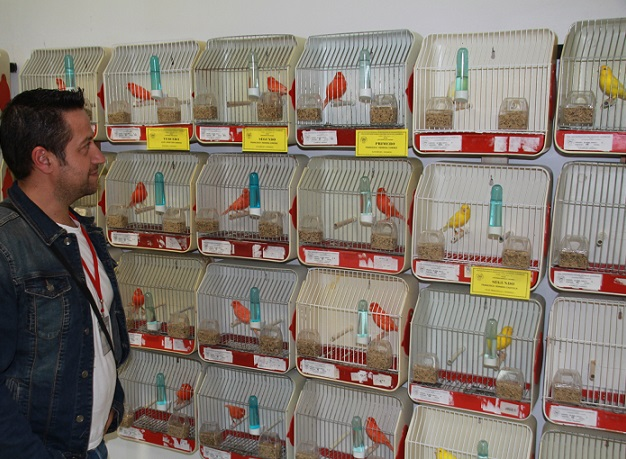 """José Alaminos consigue el XXVII Concurso Ornitológico """"Ciudad de Almuñécar"""" 2013 por el ejemplar de mayor puntuación"""