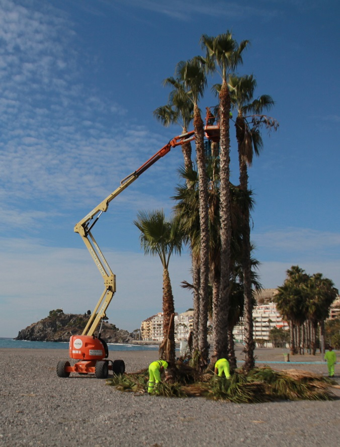 Almuñécar acomete la limpieza de las palmeras de Puerta del Mar y Fuente Piedra antes de Navidad