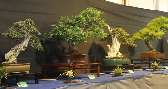 La I exposición de bonsáis de Salobreña reúne un centenar de espectaculares ejemplares