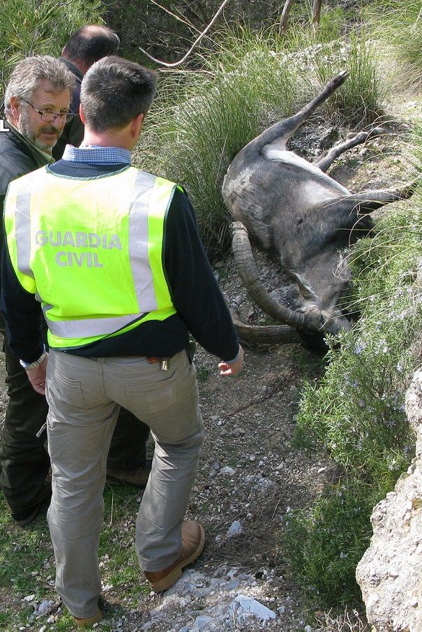 La Guardia Civil desarticula un grupo organizado que se dedicaba a la caza furtiva