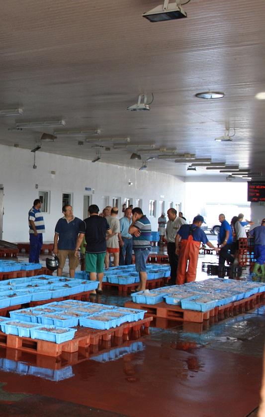 PP-Motril recuerda al PSOE que el apoyo desde el al Ayuntamiento al sector pesquero motrileño es sólido
