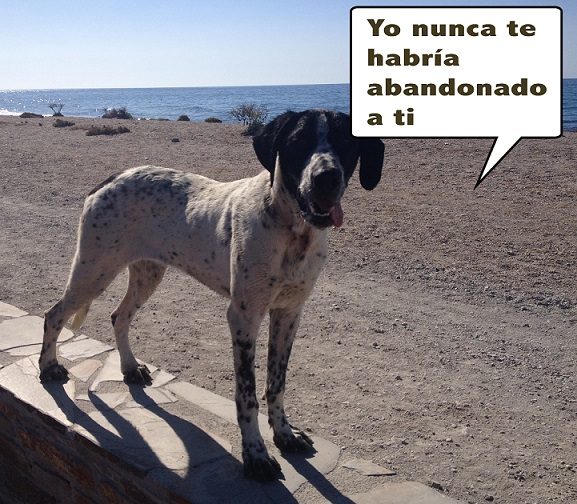 """De mascotas a caprichos""…por Bernardo Roa Guzmán"