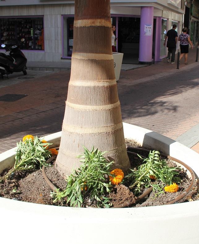 El Ayuntamiento de Motril repondrá un centenar de plantas que fueron sustraídas de las jardineras este fin de semana