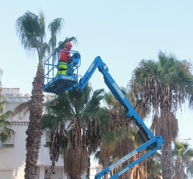 Arrancó la campaña de limpieza de las palmeras en Almuñécar