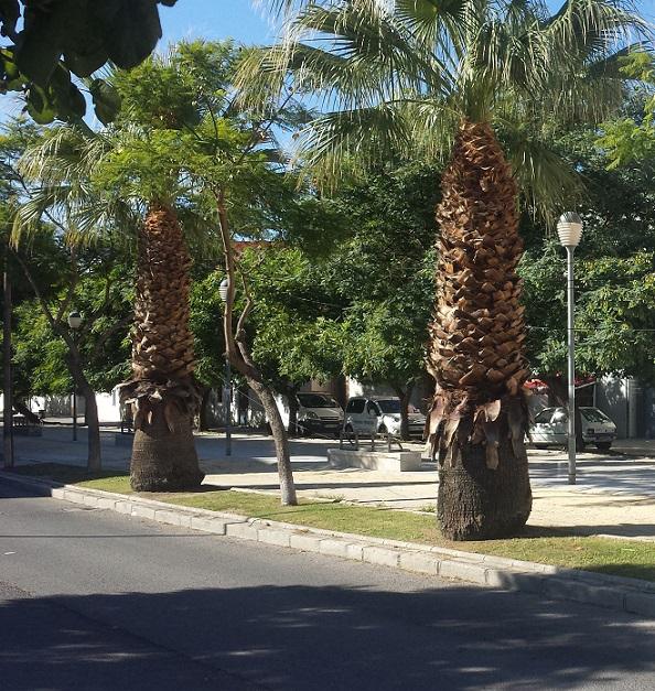 El servicio municipal de Parques y Jardines trabaja desde septiembre en el plan de poda y limpieza de árboles