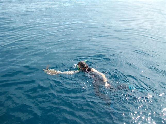 La tortuga rescatada en alta mar y traida a Motril por la Guardia Civil ha sido liberada
