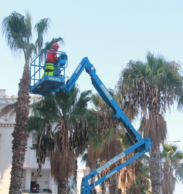 La campaña de limpieza de palmeras  llega este lunes a la avenida Europa y centro comercial sexitano.