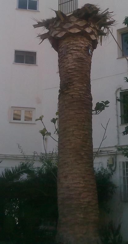 PA Motril se interesa por el tratamiento que se da al Picudo Rojo en las palmeras