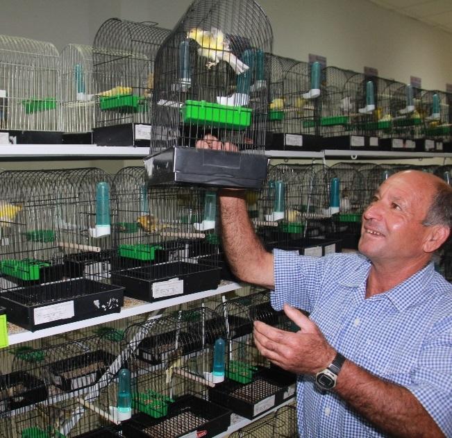 """El XXVIII  Concurso Ornitológico""""Ciudad de Almuñécar 2014"""" se clausura este domingo con la entrega de premios"""