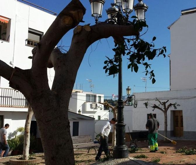 El Ayuntamiento de Almuñécar continúa con la poda y limpieza de palmeras