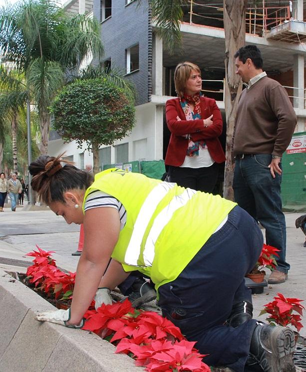Motril se pone guapa por navidad con la colocación de 5.000 pascueros en sus espacios públicos